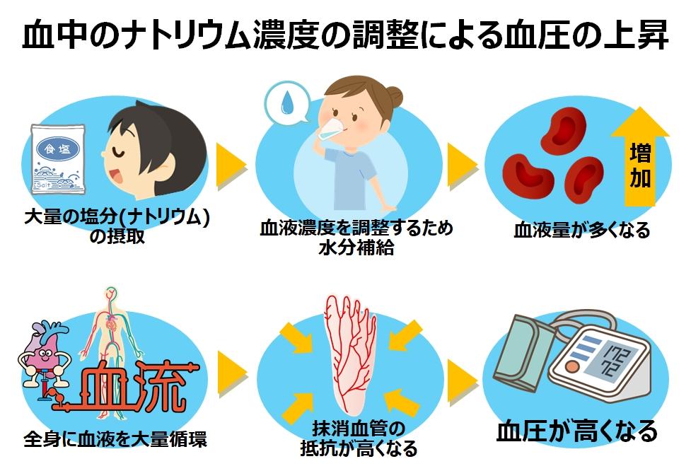 血中のナトリウム濃度の調整紹介