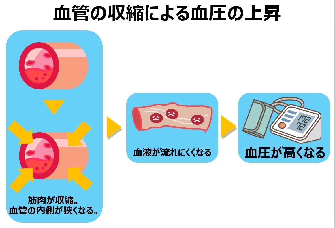 血管の収縮による血圧上昇の説明