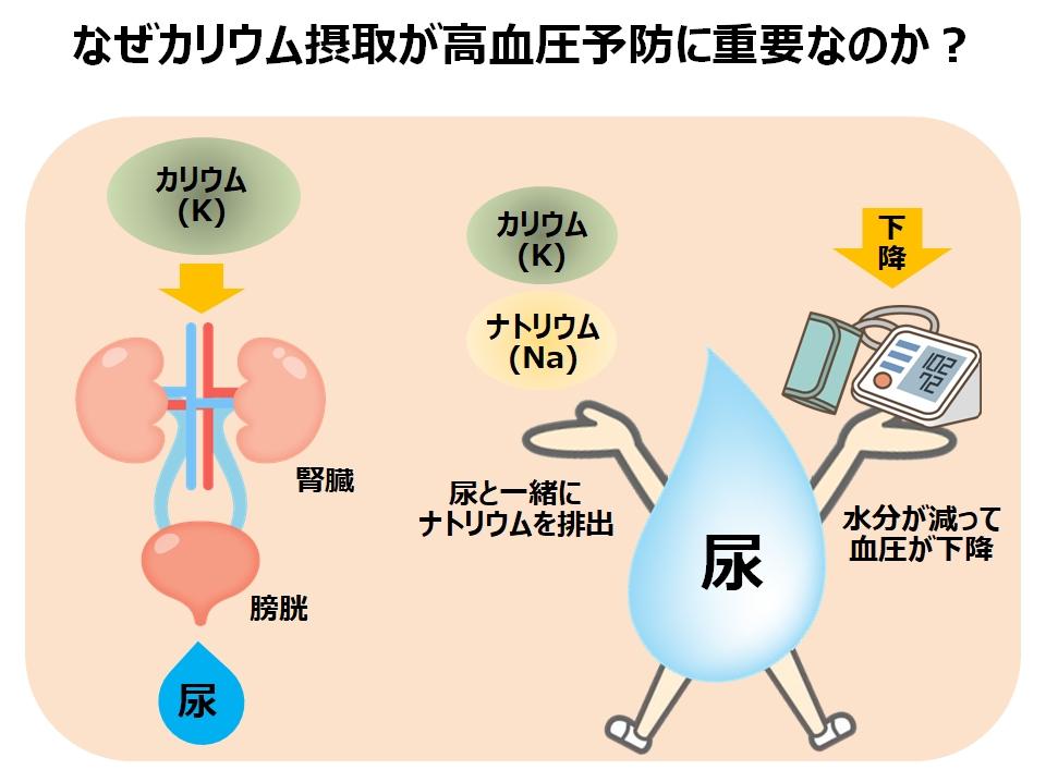 高血圧予防にカリウム摂取で食生活改善
