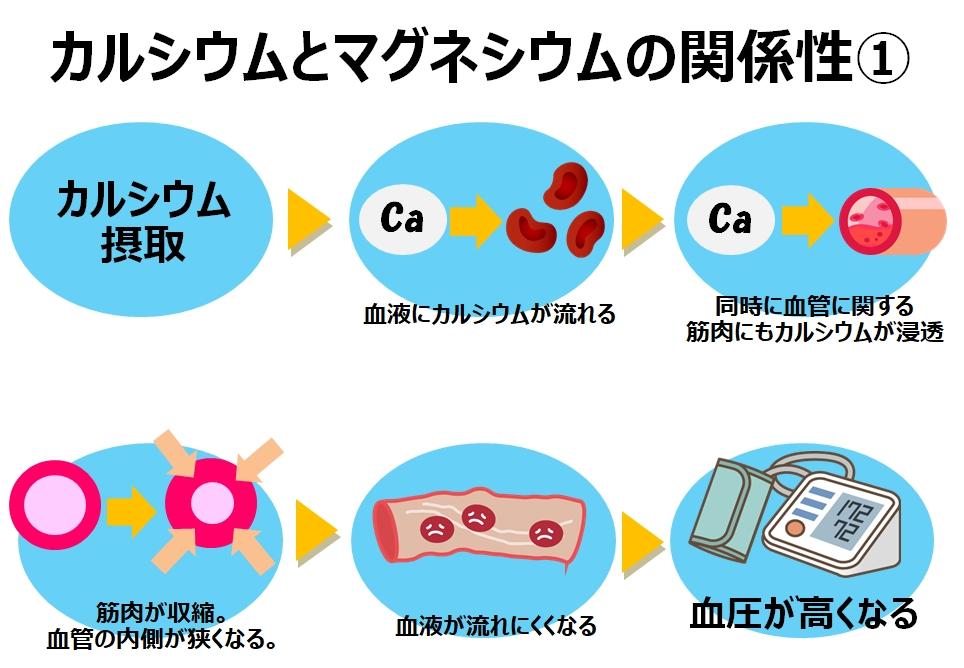 カルシウムとマグネシウムの関係性