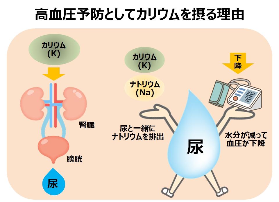 高血圧予防とカリウムの関係
